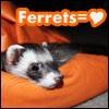 friendly ferret